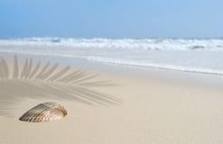 Seashell sulla spiaggia sotto la palma immagini stock libere da diritti