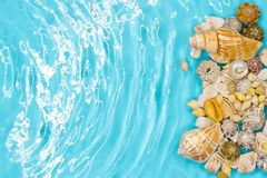 Seashell on the summer beach in sea water. Summer background. Summer time stock photo