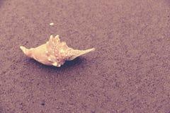 Seashell summer time beach sand vintage background Royalty Free Stock Photos