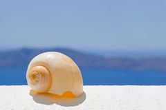 A Seashell in the Sun Stock Photos