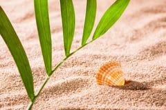 Seashell on the sunny beach Stock Images