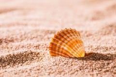 Seashell on the sunny beach Stock Photos