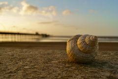 Seashell at sunset Royalty Free Stock Photography