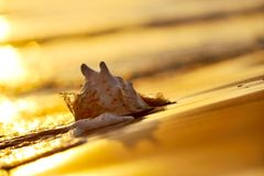 Seashell sur la plage photo stock