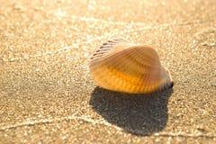 Seashell sur la plage images stock