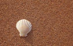Seashell sur la plage photo stock