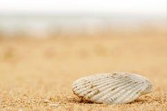 Seashell sur la plage image libre de droits