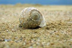 Seashell sur la plage de sable. images stock