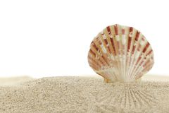 Seashell sur la plage de sable photo stock