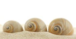 Seashell sur la plage de sable photographie stock libre de droits