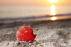 Seashell sur la plage de sable de mer Photos libres de droits