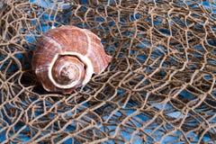 Seashell sur le filet de pêche Photos stock