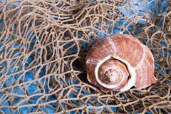 Seashell sur le filet de pêche Images libres de droits