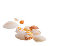 Seashell sur le fond blanc Image stock