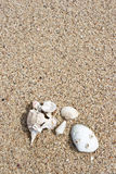 Seashell sur le fond de texture de sable photo stock