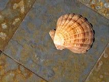 Seashell sur le gris et le marbre coloré par rouille images stock