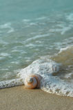 Seashell sur le rivage Photos stock