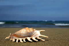 Seashell sur le rivage Photos libres de droits
