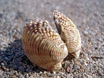 Seashell sur le sable photo libre de droits