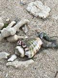 Seashell sur le sable photos stock