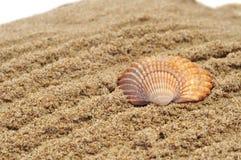 Seashell sur le sable photos libres de droits