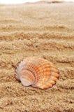 Seashell sur le sable image stock