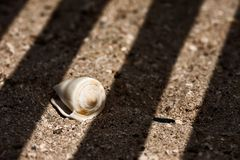 Seashell sur le sable photo stock