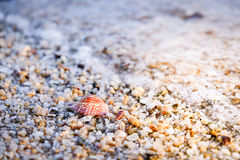 Seashell sur le sable et le Pebble Beach image stock