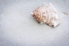 Seashell sur le sable Fond de plage d'été en Thaïlande avec l'espace de copie pour le texte photo libre de droits