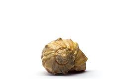 Seashell sur un fond blanc Photo libre de droits