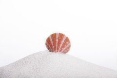 Seashell sur un hil de sable Photos libres de droits