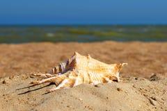 Seashell sur une plage. image stock