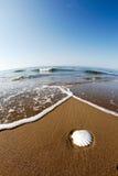 Seashell sur une plage image libre de droits