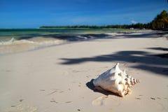 Seashell sur une plage des Caraïbes image libre de droits