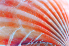 Seashell surface Royalty Free Stock Photography