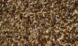 Seashell tekstura Fotografia Stock