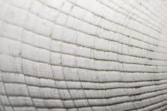 Seashell Texture Royalty Free Stock Photo