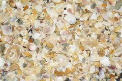 Seashell texture Royalty Free Stock Photography