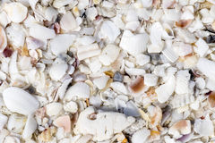Seashell Textures #2 Stock Photo