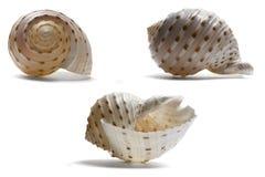 Seashell from three Angles Stock Photos