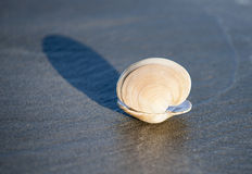 Seashell throws shadow on sand. Stock Photography