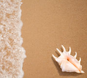 Seashell top view on sea surf edge. Background royalty free stock photo