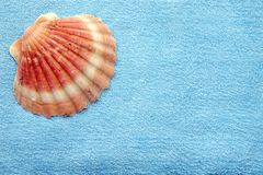 Seashell and towel. Empty seashell lying on a blue towel Royalty Free Stock Image