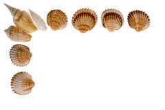 Seashell - trame sur le blanc photos libres de droits