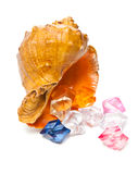 Seashell with translucent stones Stock Photography