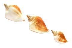 Seashell trois Photographie stock