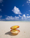 Seashell on tropical beach royalty free stock photography