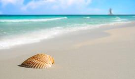 Seashell on Tropical Beach Stock Photography