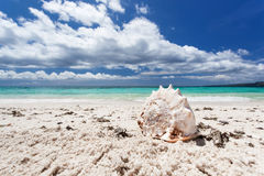 Seashell on tropical beach, Boracay Stock Image