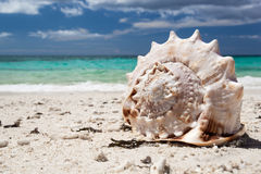 Seashell on tropical beach, Boracay Stock Photo